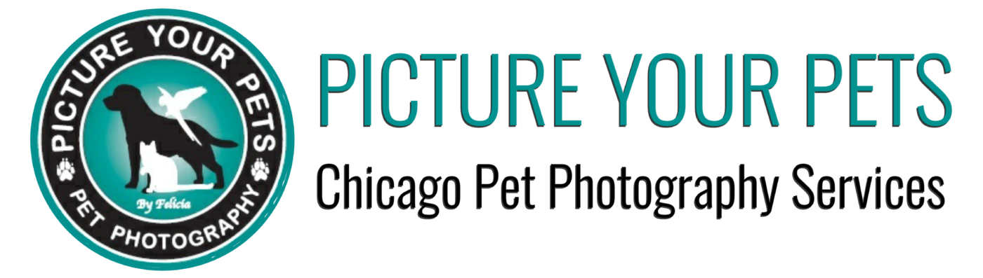 Picture Your Pets